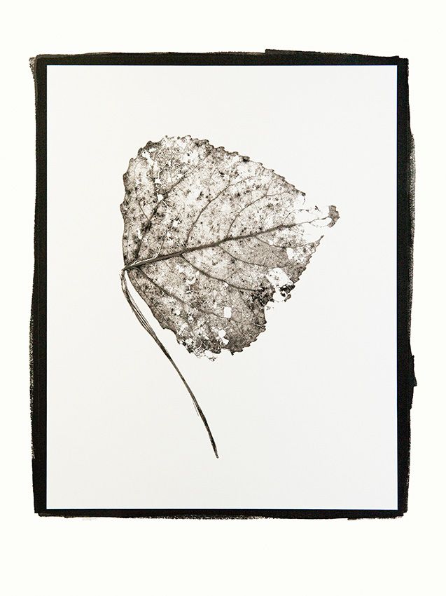 Leaf. by Martin Sundstrom