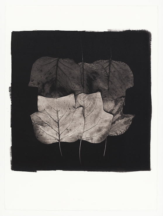 Platinum Palladium Print for Paul Kenny