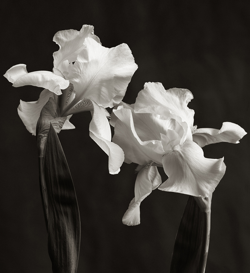 Iris Duo. Available in 3 sizes.